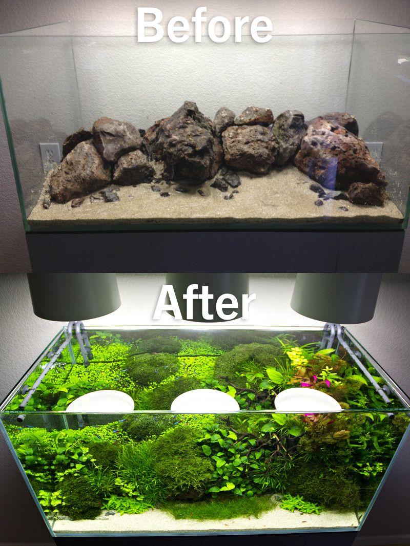 Freshwater aquarium fish gobiidae - Freshwater Aquarium Fish Gobiidae