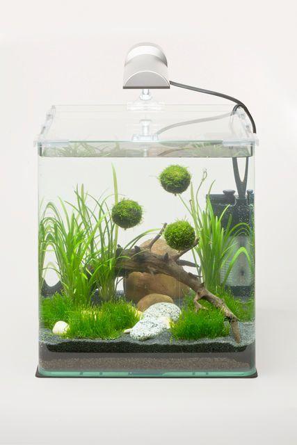 Pin von Sandra Morhaye auf @ Home - Aquascaping Pinterest - deko fur aquarium selber machen