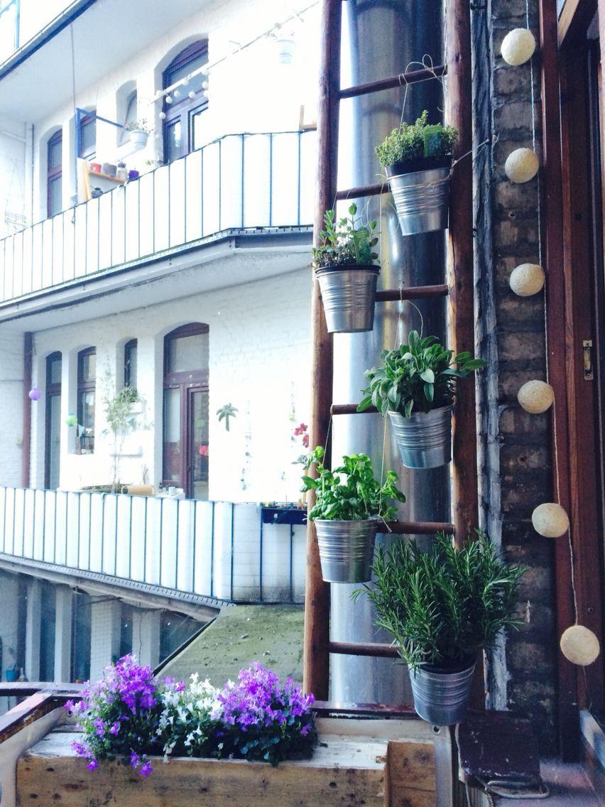 Kruter Leiter auf dem Balkon Der Frhling kann