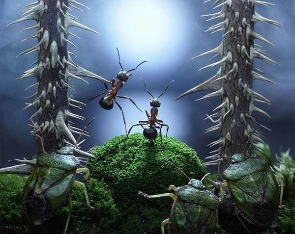 Action-Packed Ant Photography - Andrey Pavlov Uses Macro Lens to Capture the Lives of Bugs (GALLERY)