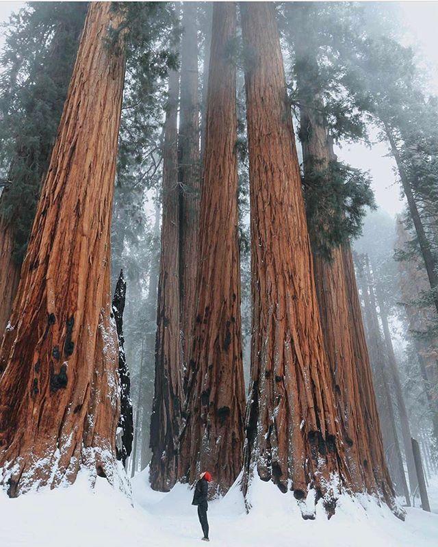 California Map Sequoia National Park%0A Among giant trees in Sequoia National Park Photography by   ellelu   WeLiveToExplore