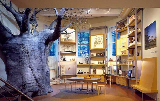Discovery Room Natural History Museum New York