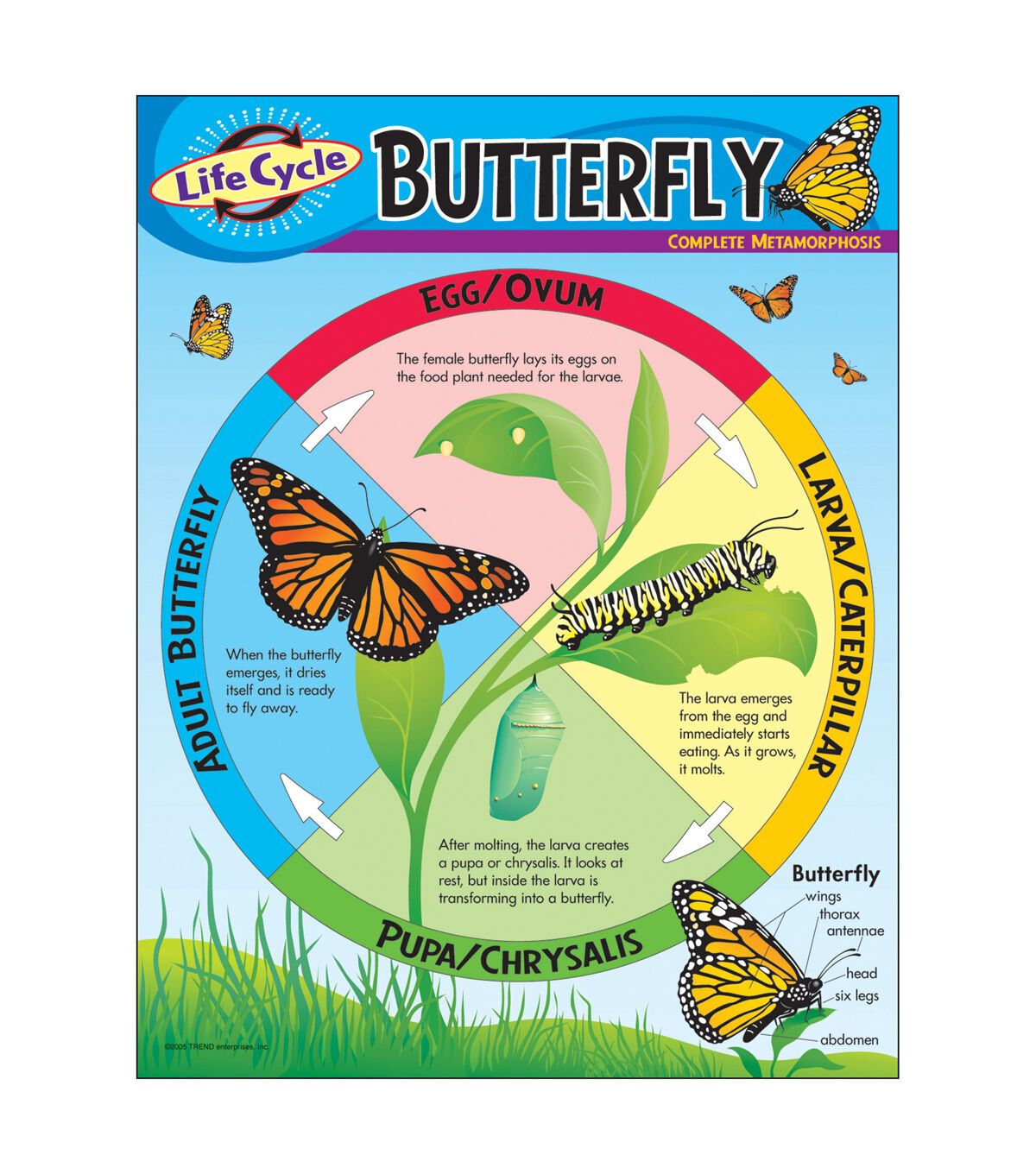 Life Cycle Of A Butterfly Learning Chart 17 X22 6pk