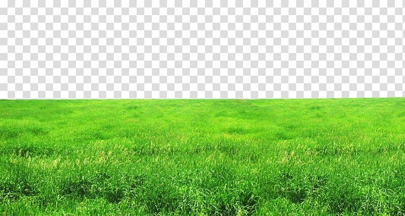 Grass Field Grassland Ecosystem Lawn Grasses Fig Green Grass Transparent Background Png Clipart Green Grass Background Grass Field Grass Background