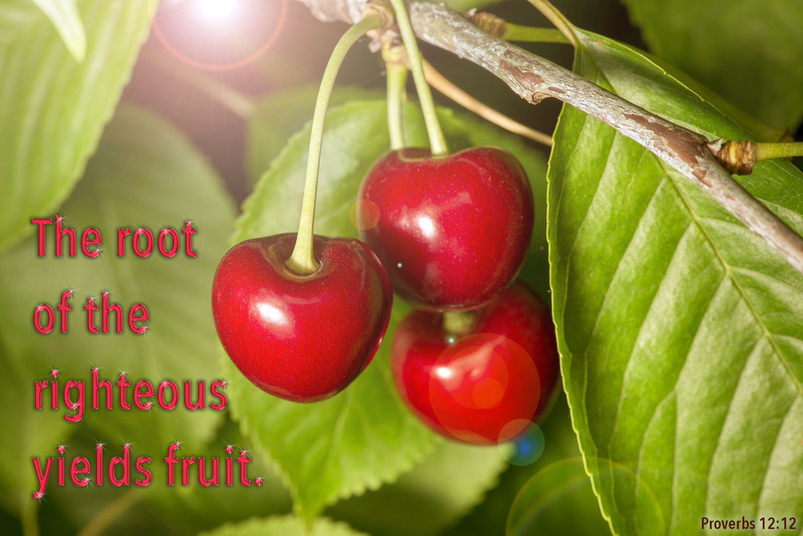 Proverbs about fruits and vegetables