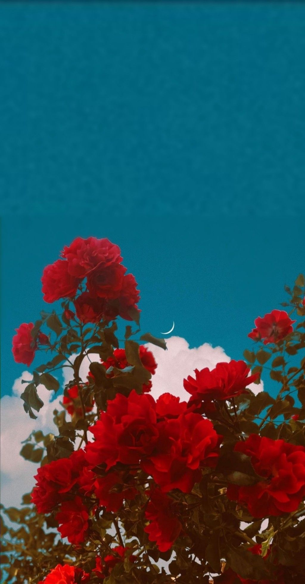 Red Roses And Blue Sky Dark Red Wallpaper Wallpaper Aesthetic Red Red Aesthetic Wallpaper