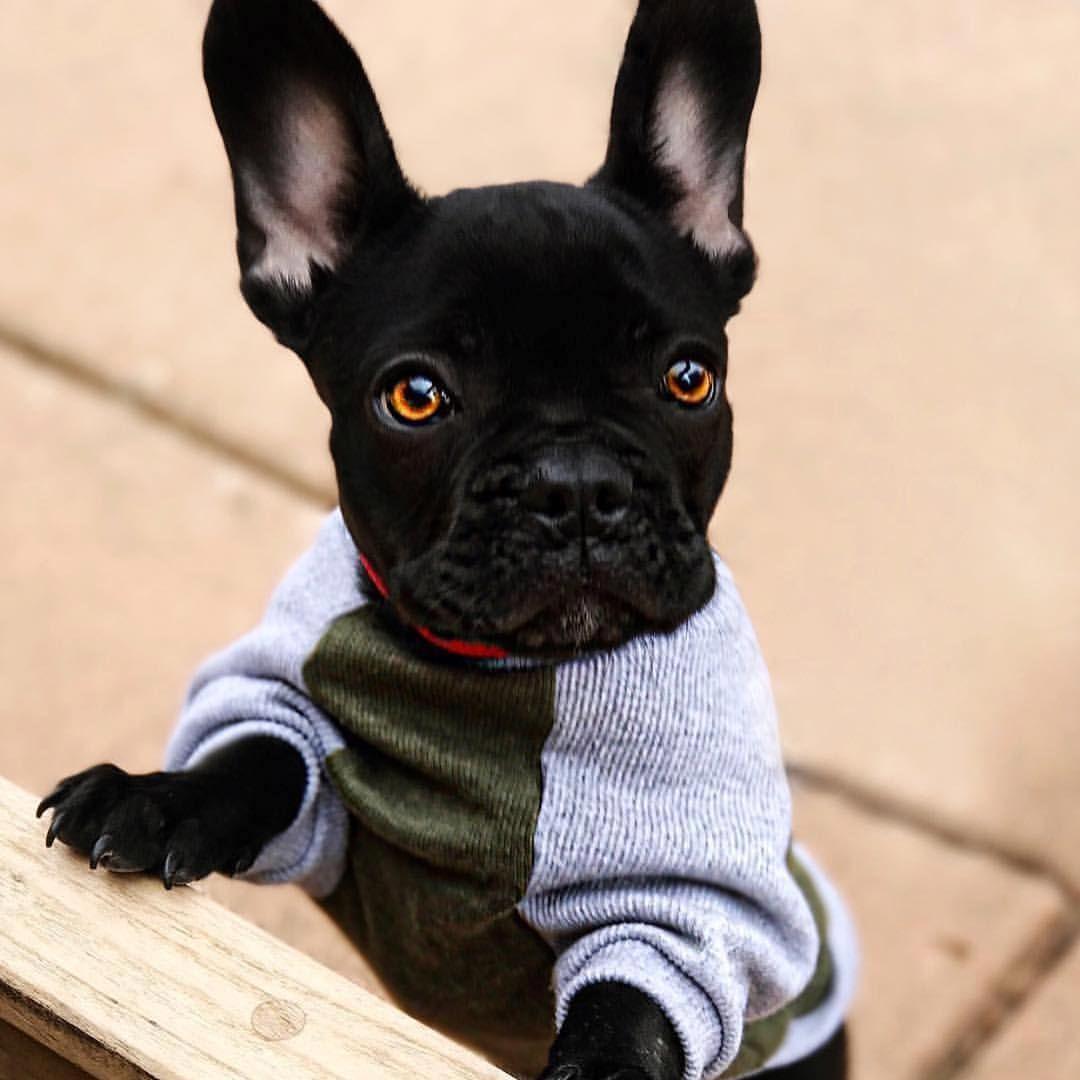 Bulldogs villa no instagram sweater weather is finally