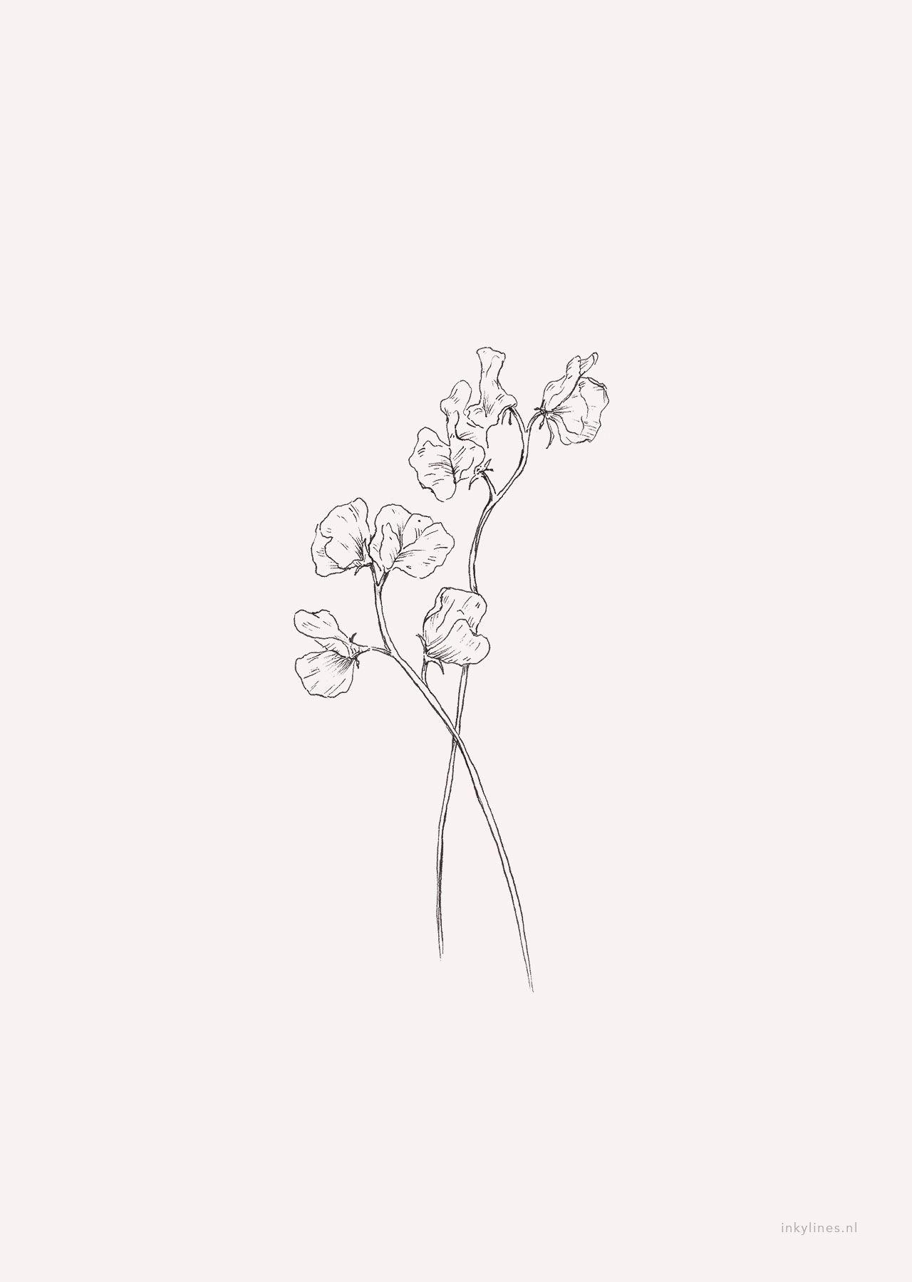 Sweet Pea Sweet Pea Tattoo Pencil Drawings Of Flowers Floral