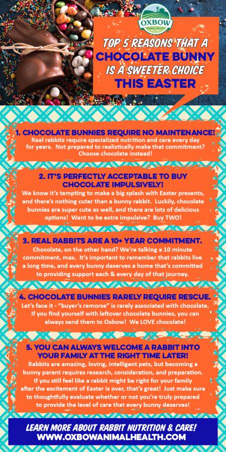 Oxbow Animal Health Top 5 Reasons That A Chocolate Bunny