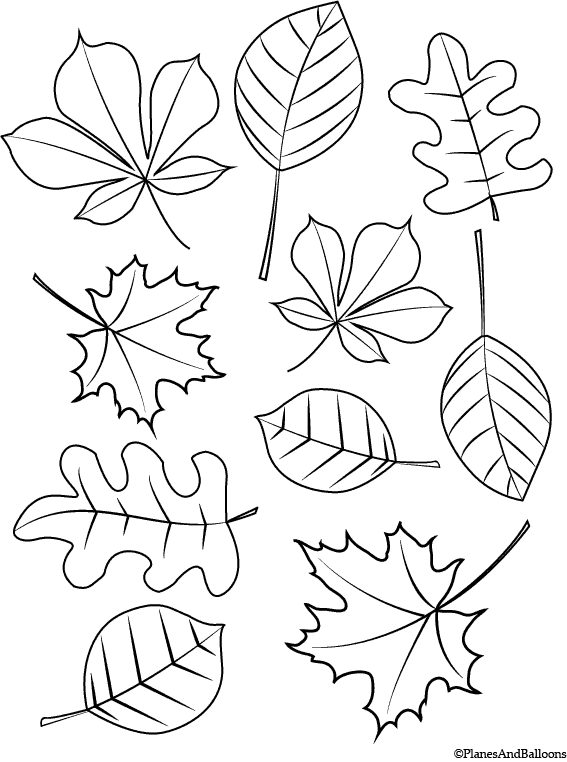 Fall Coloring Pages For Young Children FREE Instant Download Fall  Coloring Sheets, Leaf Coloring Page, Fall Leaves Coloring Pages