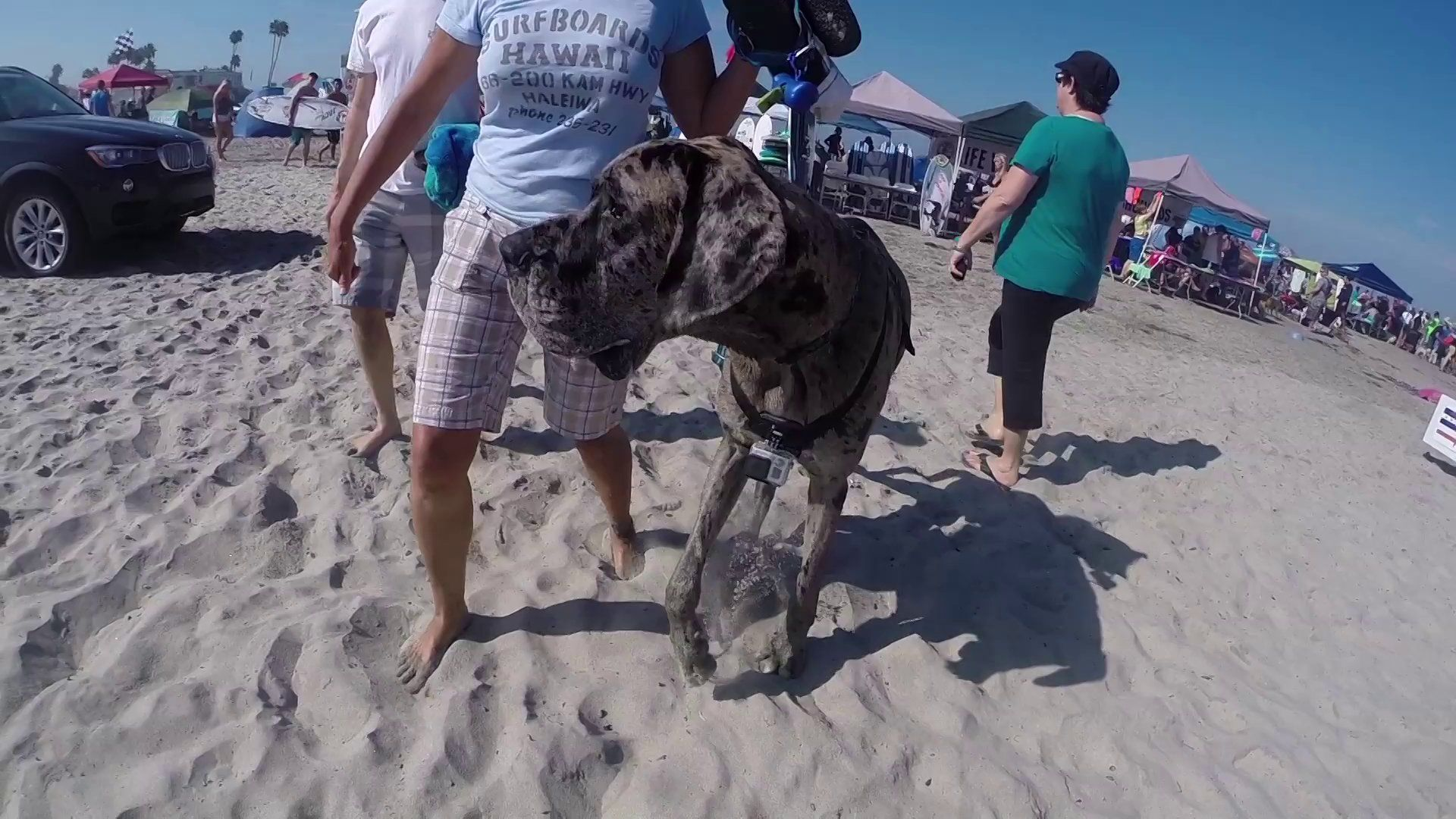 From Great Danes To Dachshunds Gopro S New Fetch Mount Captured