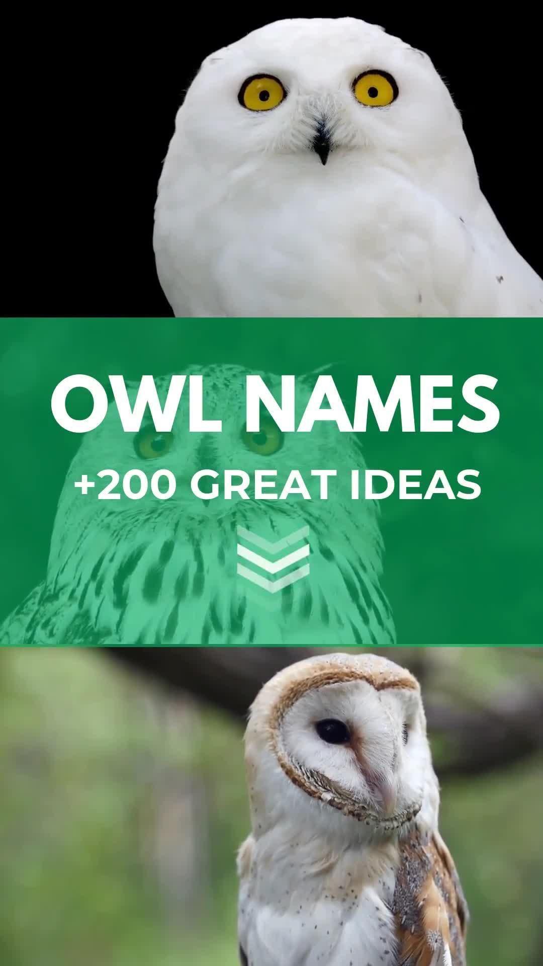 Owl Names 200 Incredible Ideas Incl Harry Potter Owl Petshoper Video Video Cute Little Animals Cute Names Pet Names
