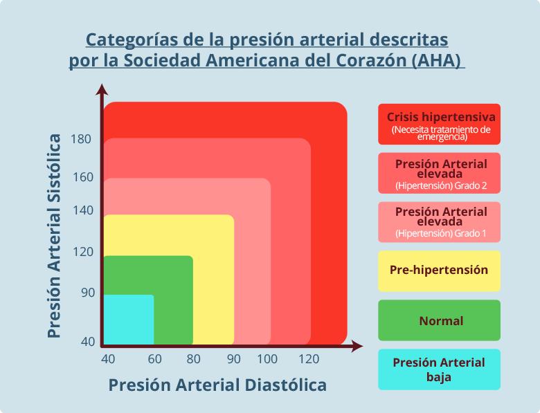 Arteria cuando la presión arterial es más baja