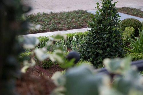 hecallsmemoonbeam | Landscape, Garden spaces, Plants