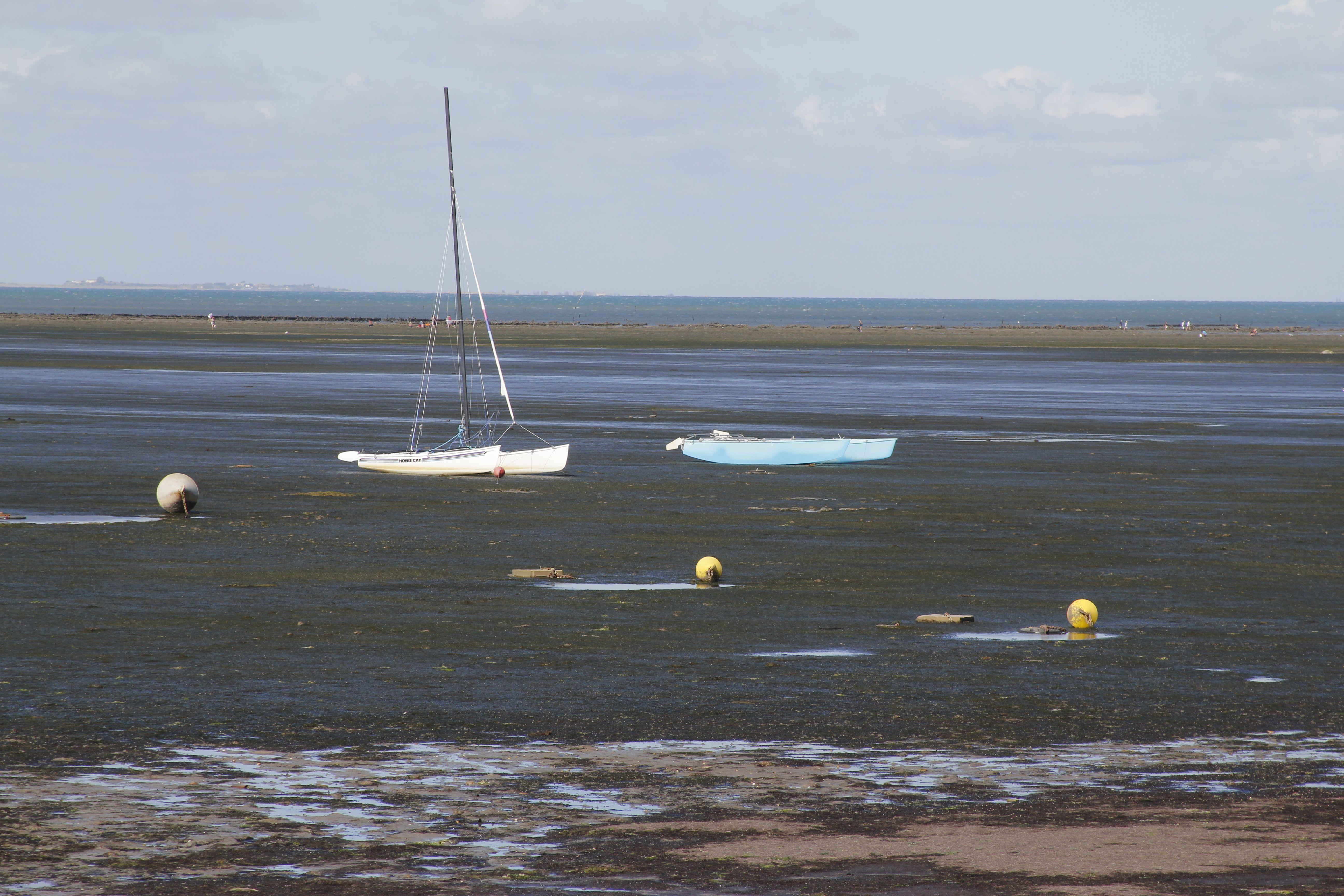 Soirée au bord de l'eau ; ile de Ré