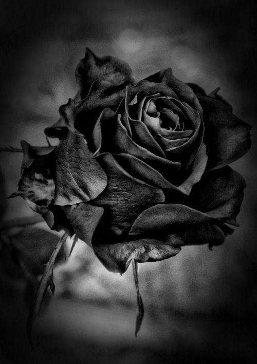 Ive got ur name written here in a rose tattoo tattos pinterest blueiceheart3 white flowerspink rosesblack mightylinksfo