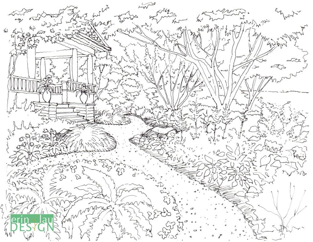 Original sketch of garden drawing, taken from my coloring