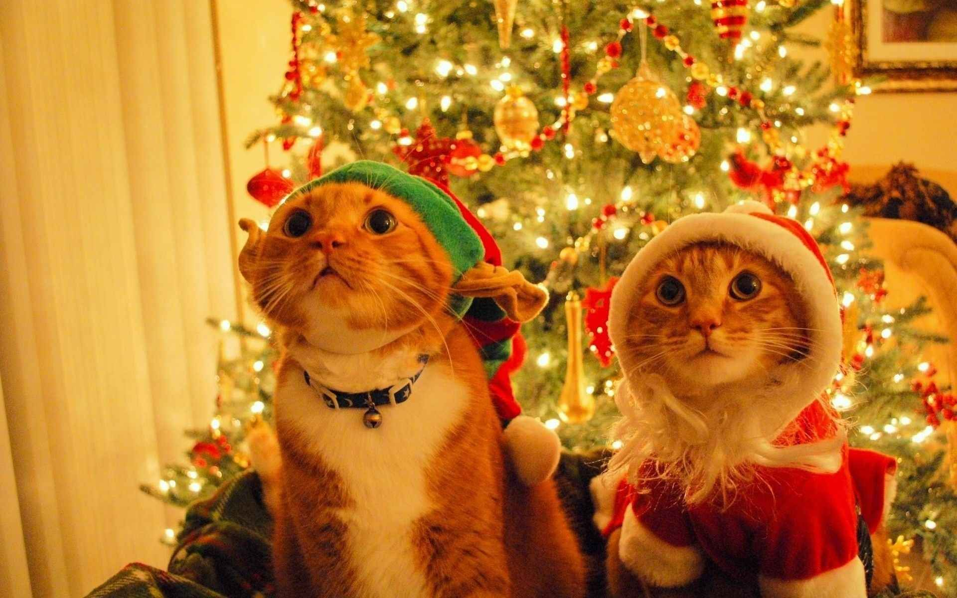 Two Cats Merry Christmas Wallpaper Free Downlo 10642 Wallpaper