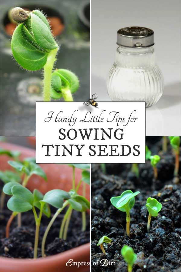 Tips Tools For Sowing Tiny Seeds Gardens Gardening Garden