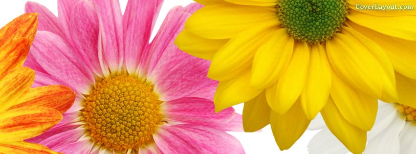 Pin Spring Cover Photos For Facebook Timeline Covers On