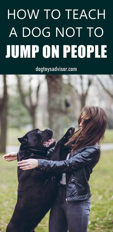 Idea By Nicole Leslie On Dog In 2020 Dog Behavior Training