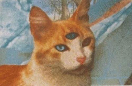 gato con tres ojos