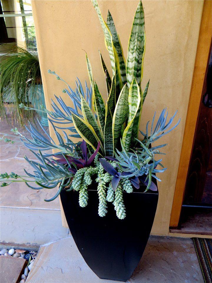 Composition De Plantes Grasses Dans Un Grand Pot Jardineria En