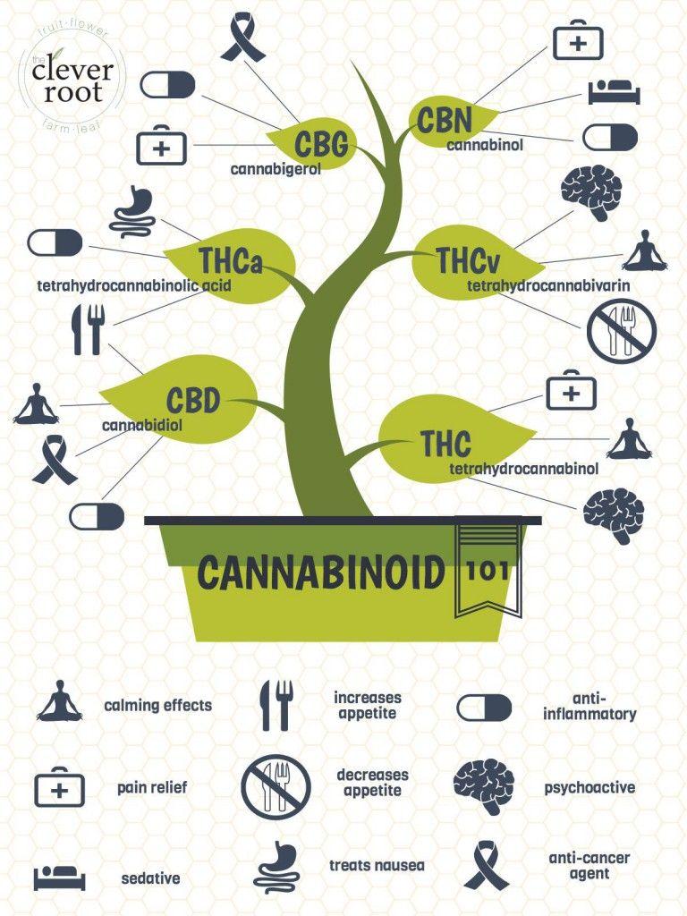 Kanabinol - what it is: medicine or drug 53