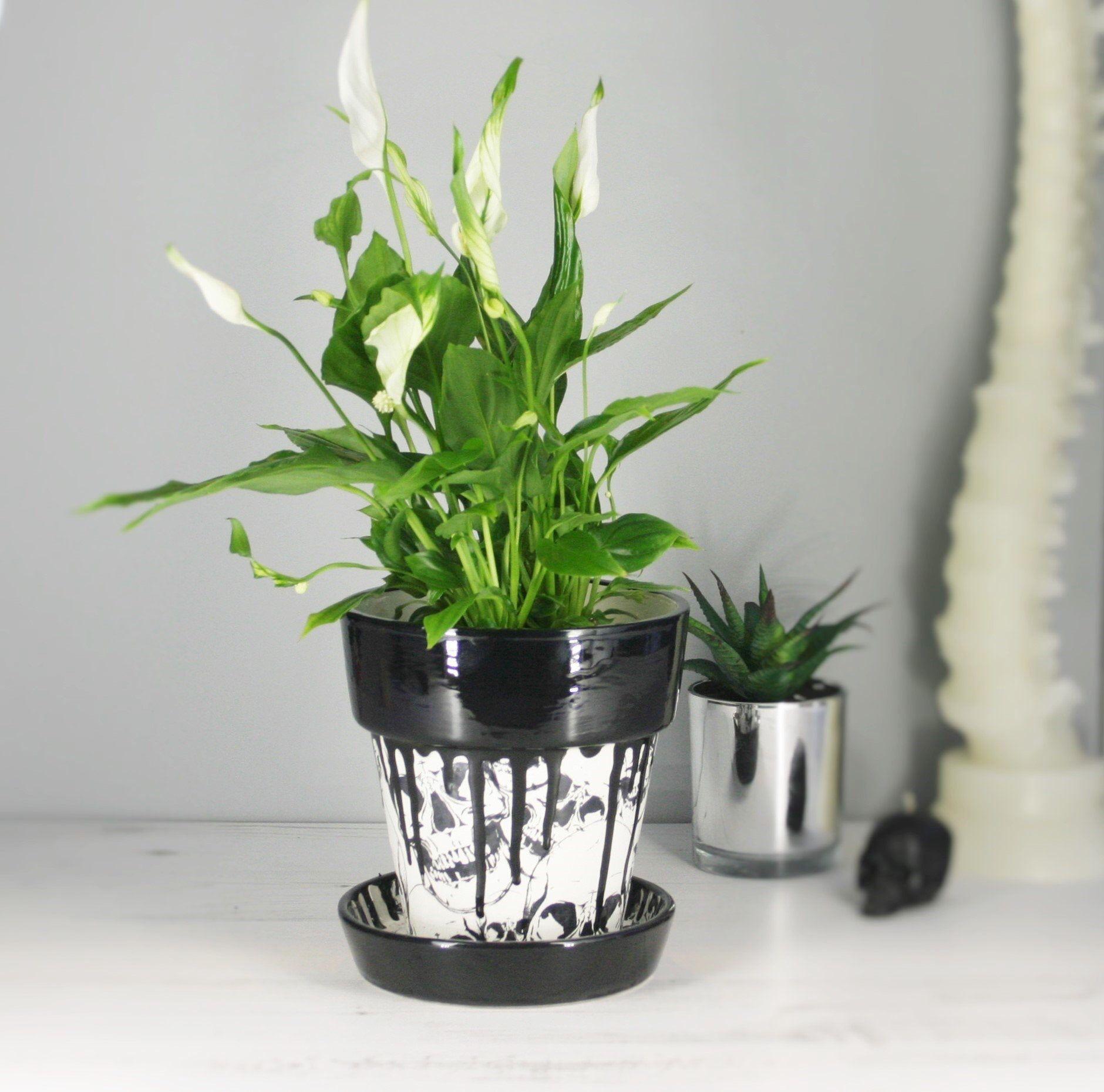 Decorative Ceramic Indoor Wall Planter Skull