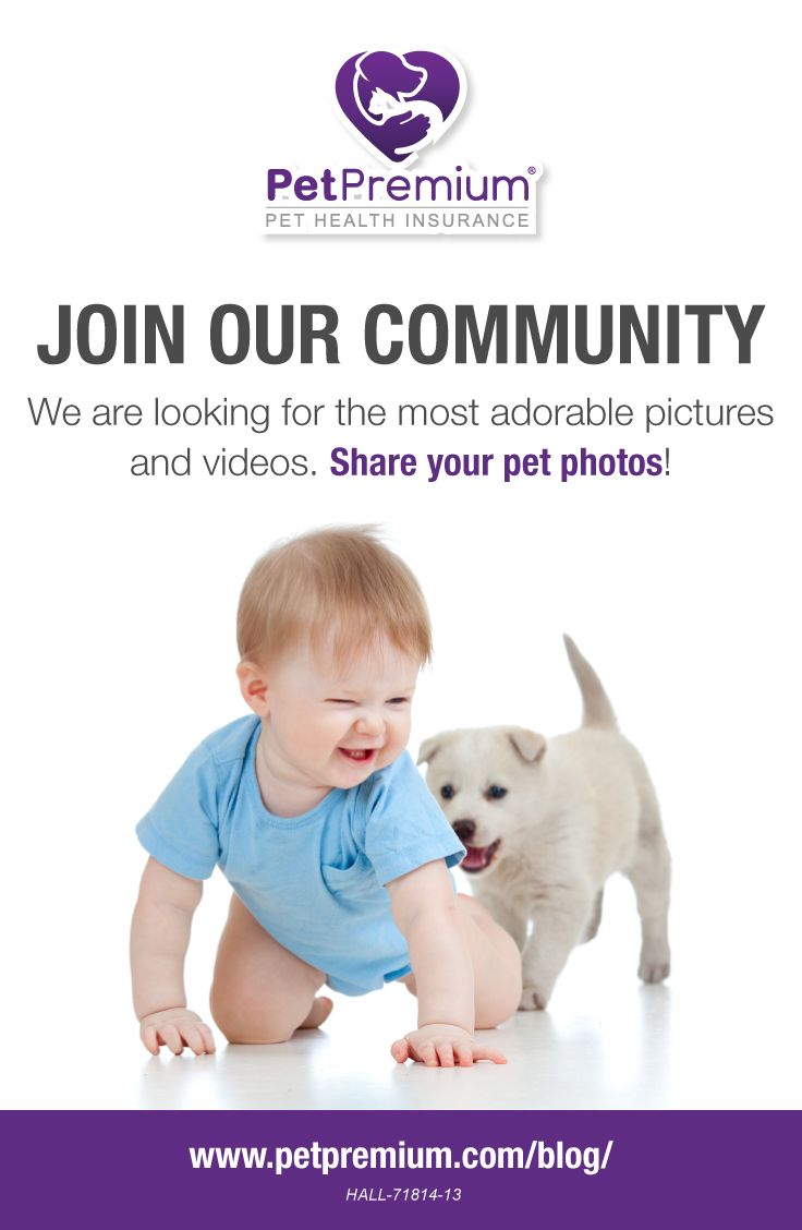 Submit Photo Or Video Petpremium Cat And Dog Photos Animal Photo Cute Puppies
