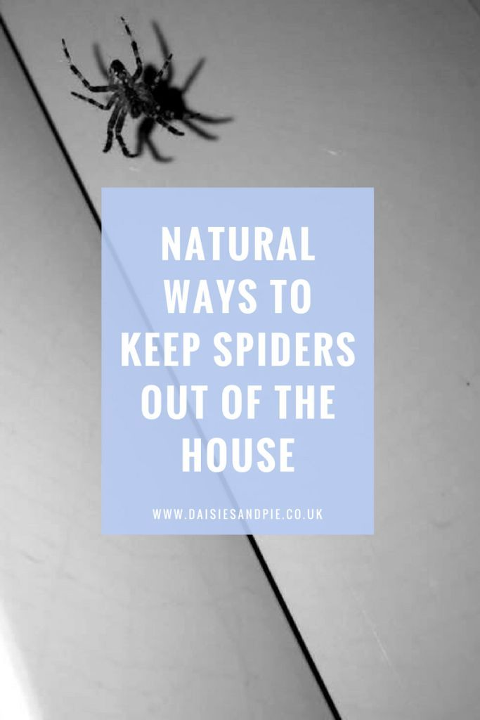 Natural Ways To Keep Spiders Out Of The House Dyi Stuff