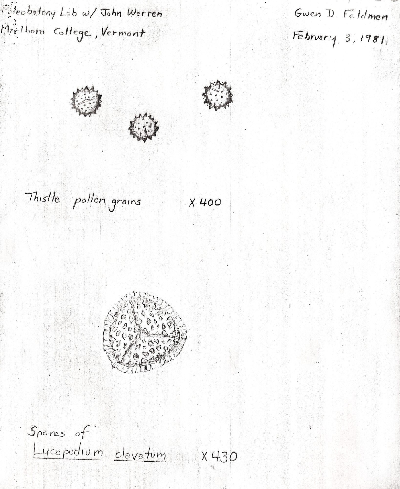 Gwen S Early Pollen Sketches Old Lights University Of Connecticut Botanical Illustration