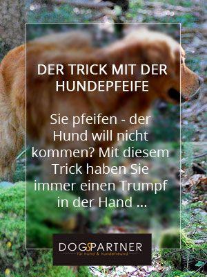 Der Trick Mit Dem Pfiff Hundetraining Hundchen Training Hunde