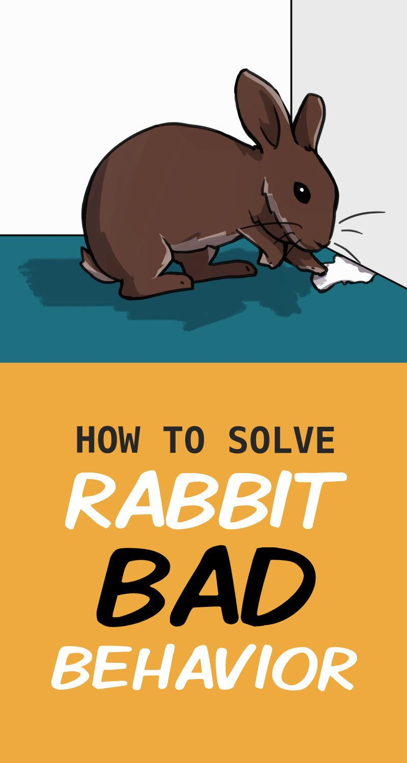 How to solve common bunny behavior problems in 2020