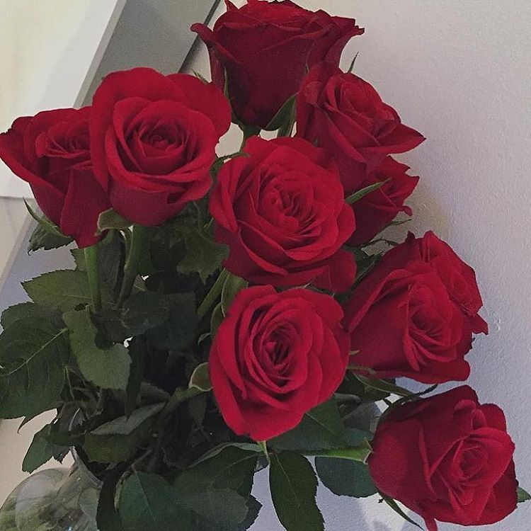 Why Don T We Preferences Flower Aesthetic Flowers Red Roses