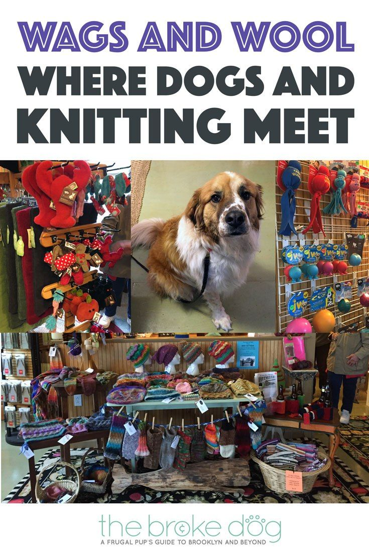 Did you know there is a store that combines knitting and dogs? It's called Wags and Wool, and it's my new favorite store!