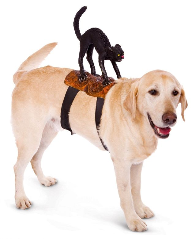 Humorous Dog Costumes That Look Like Things Are Riding On Their