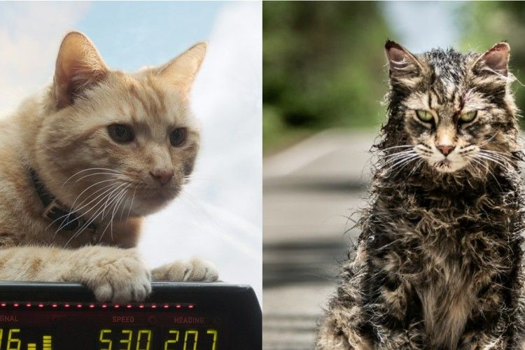 The Power Of Memorable Movie Cats In Captain Marvel And Pet Sematary Pet Sematary Cats Pets