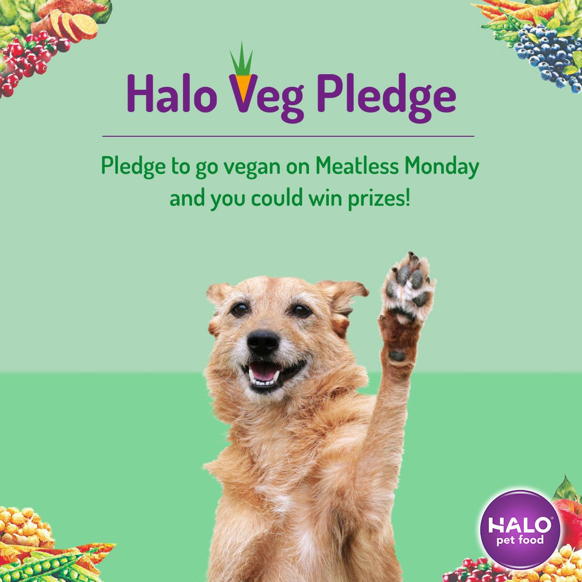 Have Your Dog Take The Halo Veg Pledge For World Vegan Day World Vegan Day Going Vegan Veg