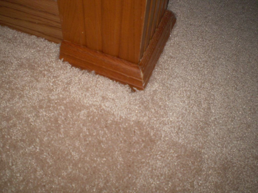 Home Depot Carpet Install Minimalist Check More At Http Blogcudinti