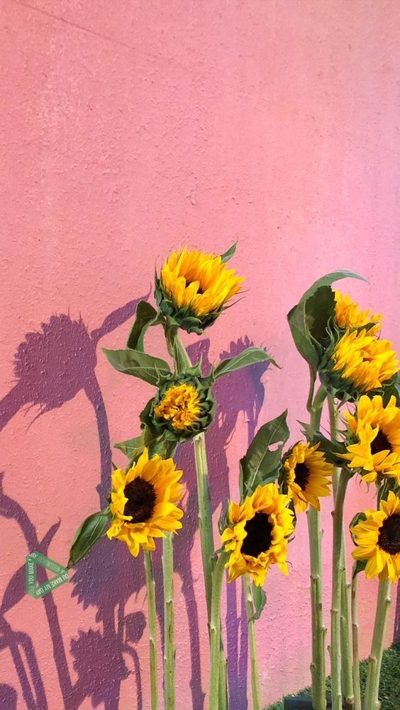 Pin by Rel Bulacsao on Walls in 2020 | Sunflower wallpaper ...