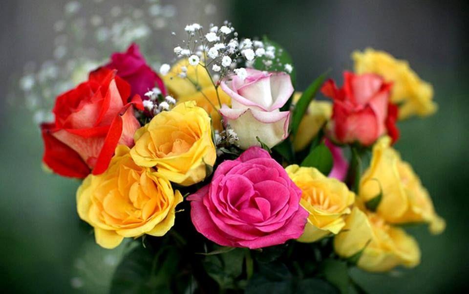 IMÁGENES DE FLORES ® Fotos de Rosas, Margaritas o Lirios ...