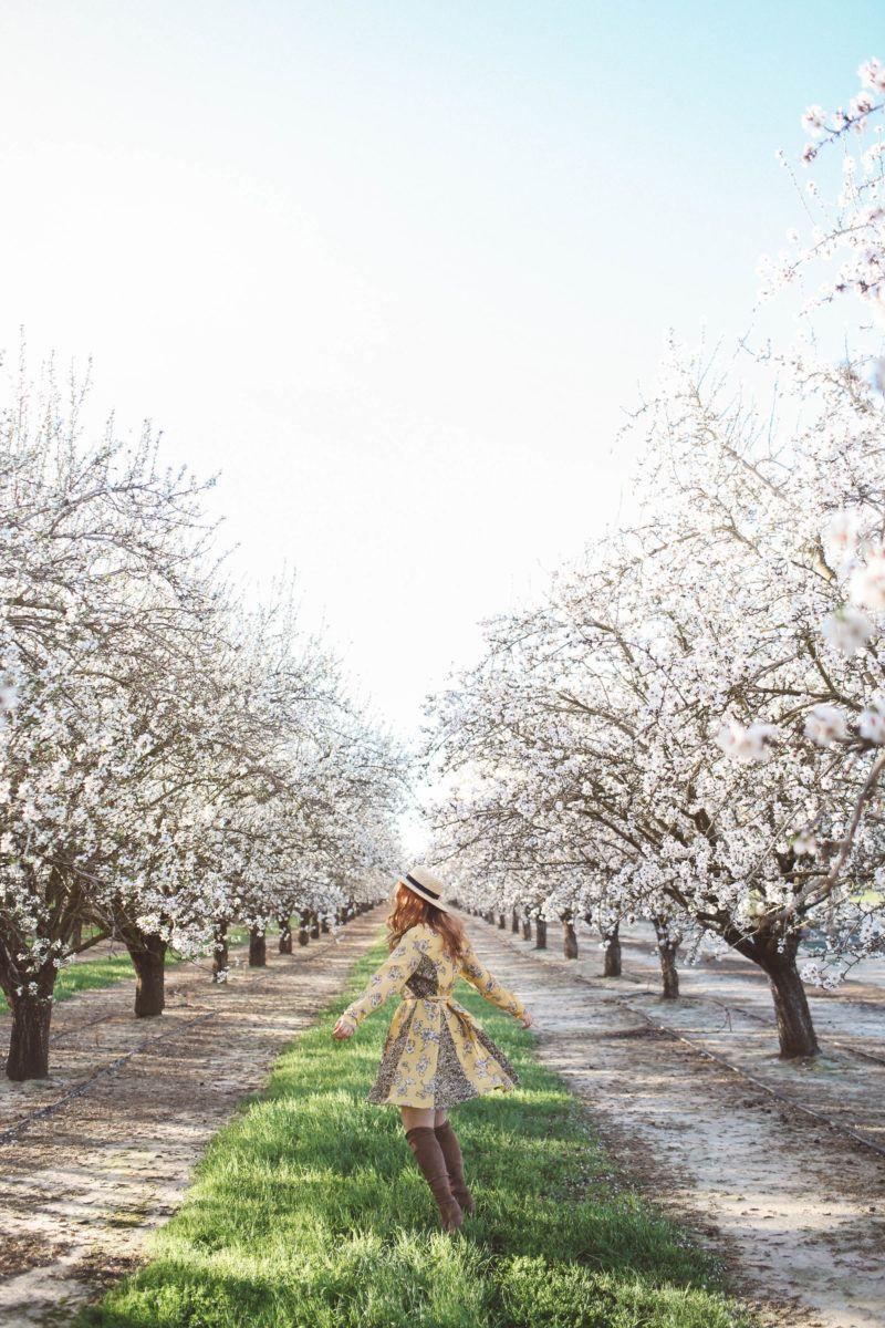 Almond Blossoms Woodland Ca California Flowers Woodland Ca Blossom Tree Wedding