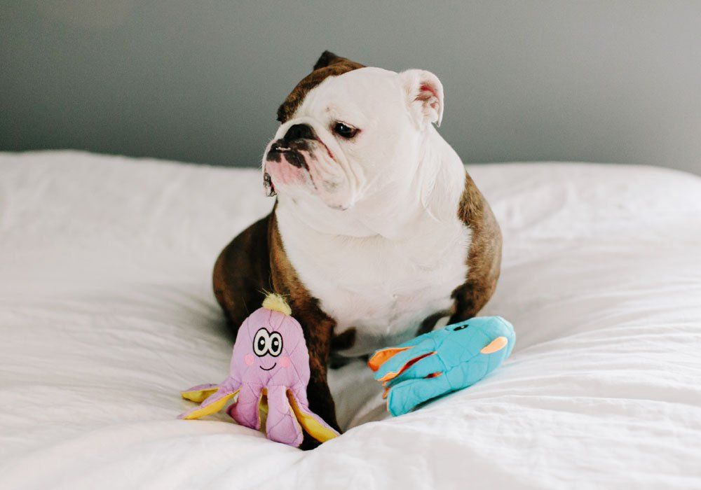 Fetch Pet Products Blue Squid Multiple Squeaker Dog Toy Brightly
