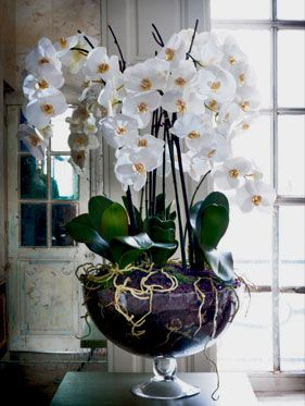 Sia orchids interior design pinterest orchid sia orchids fake flowerswhite mightylinksfo Image collections