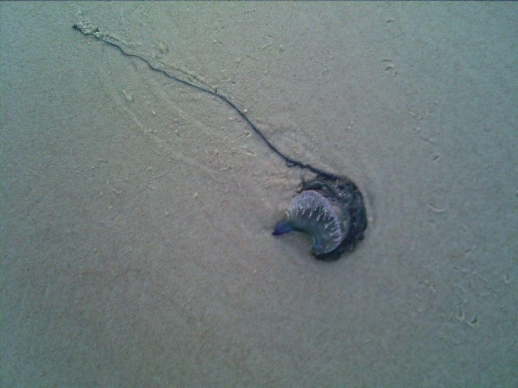 Tiny jellyfish