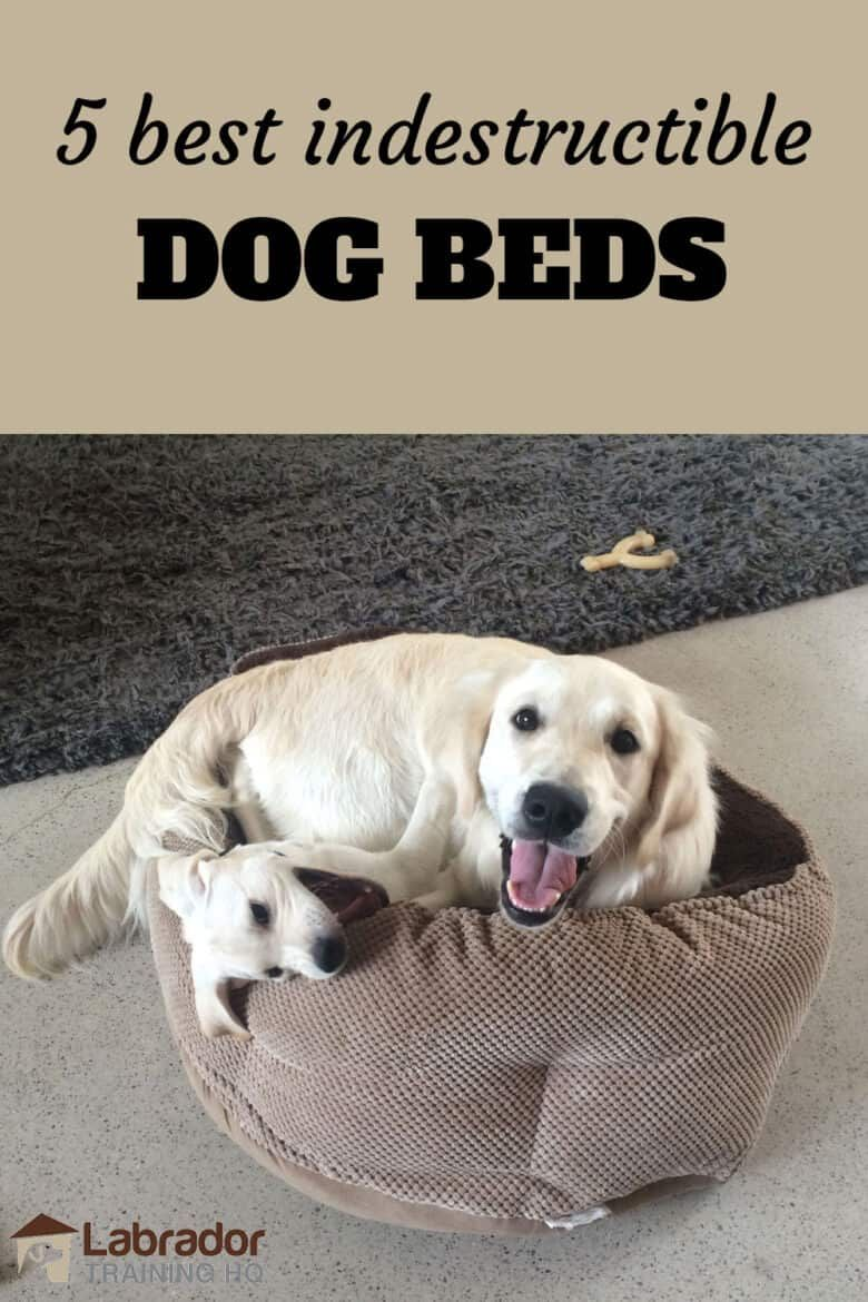 5 Best Indestructible Dog Beds Available In 2020 Indestructable Dog Bed Dog Bed Dog Pillow Bed