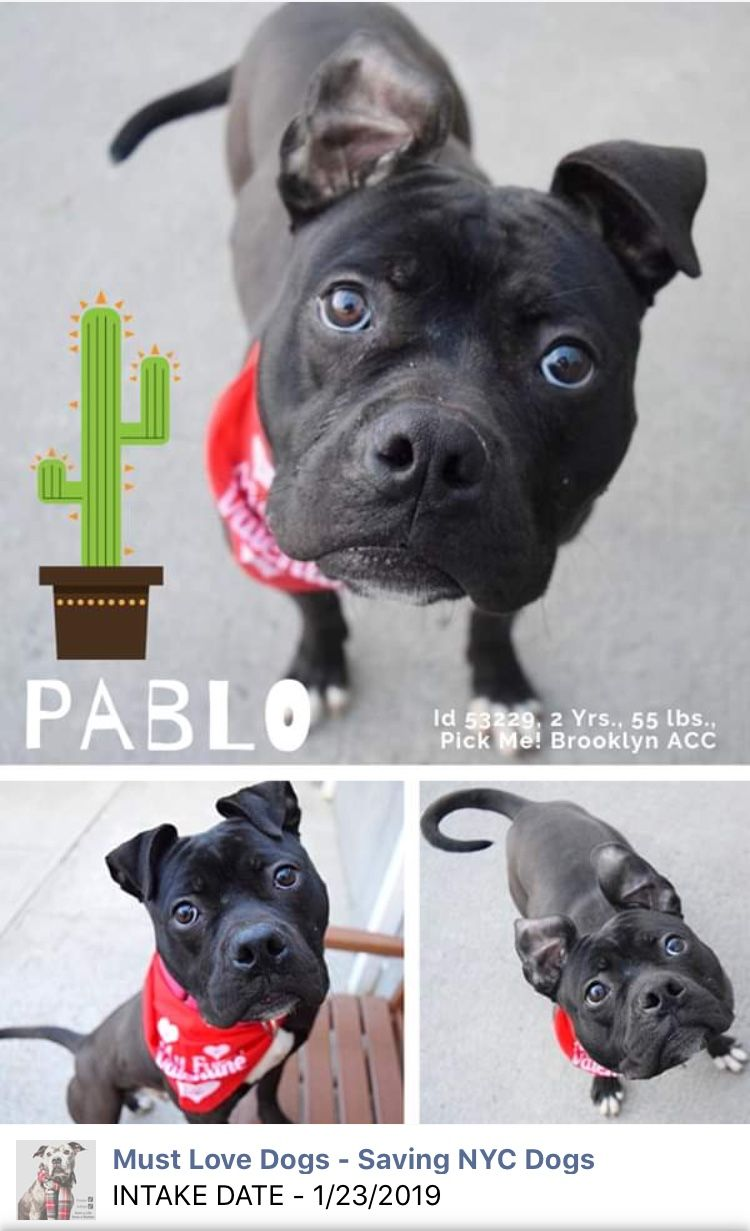 1 23 19 Please Help Pablo Out Of Nyc Acc Safe Loved And