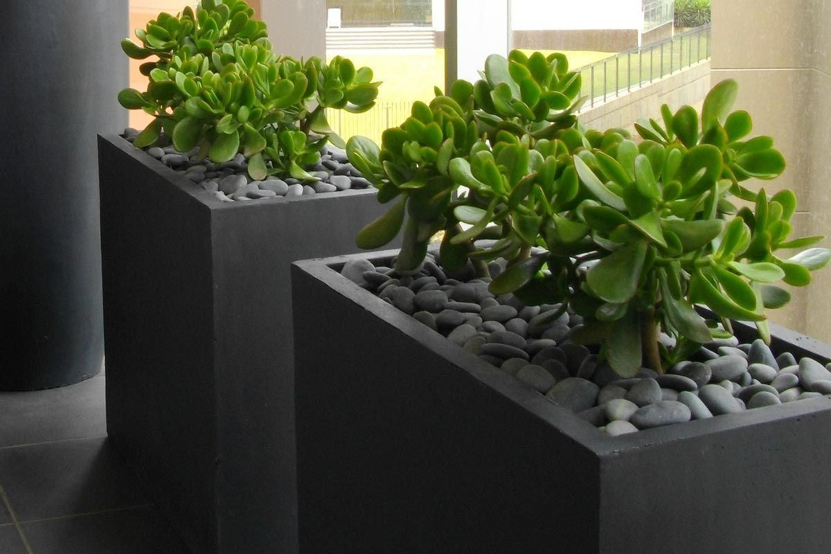 Low maintenance plants in lightweight planters deck for Low maintenance plants shrubs