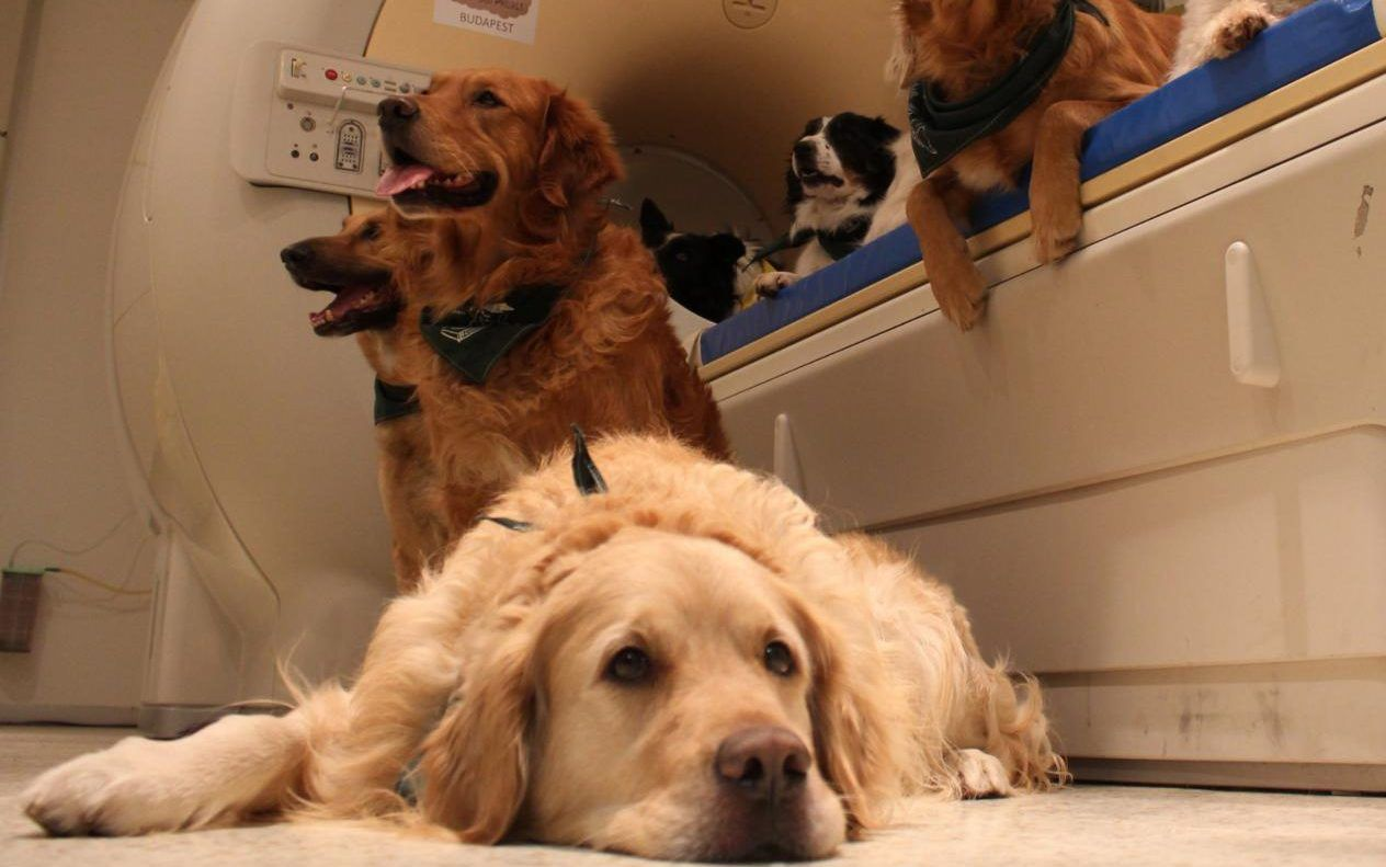 Dogs Understand What We Say And How We Say It Scientists Find Dog Brain Dogs Your Dog